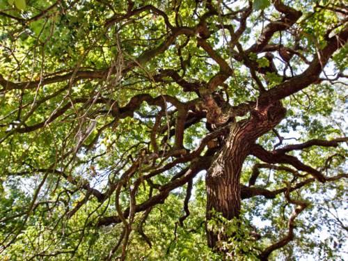 Blick in die Kronen mehrerer Bäume.