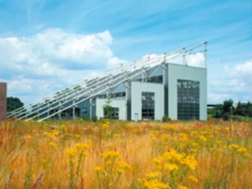 moderne Gebäude auf einer Wiese mit gelben Blumen