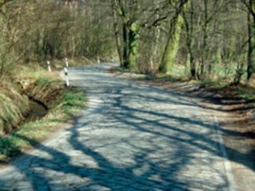 Ein kopfsteingepflasterter Weg, gesäumt von Bäumen