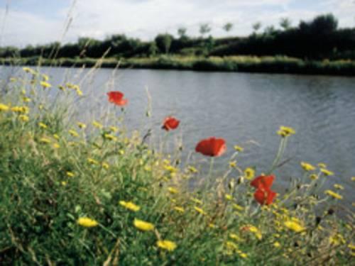 Blick zwischen roten Klatschmohnblüten und gelben Löwenzahnblüten hindurch auf den Mittellandkanal