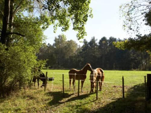 Pferde auf der Wiese