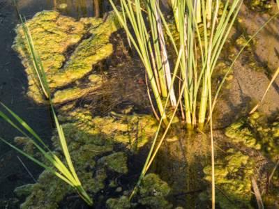 Sandiges, vom Wasser überspültes Seeufer mit Binsen und Algen