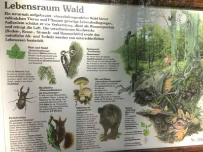 Eine Infotafel, die mit Text und Bildern über den Lebensraum Wald informiert.