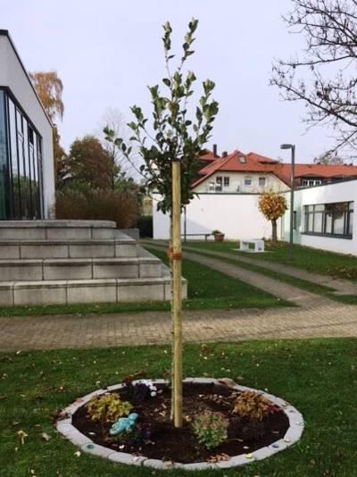 Ein junger Baum wächst an einem Pfosten.
