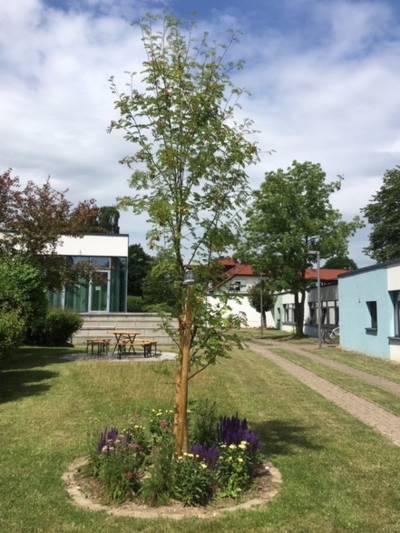 Ein Baum wächst auf einer Rasenfläche in einem Kreis aus Rasenkantensteinen, auch Blumen wachsen in diesem Kreis.