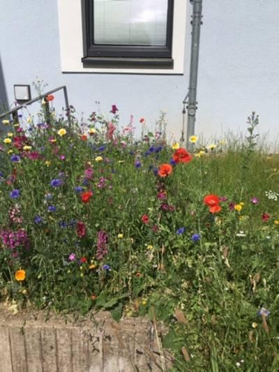 Blumen sprießen auf einer Rasenfläche.