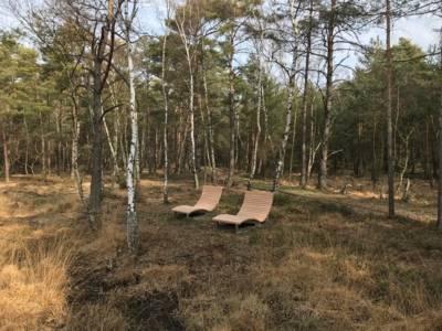 Holzliegen in einem lichten Birkengelände