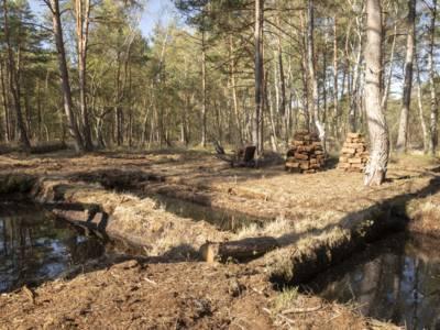 Rechteckige,mit Wasser gefüllte Becken in einer Waldlandschaft, dahinter Torfsoden