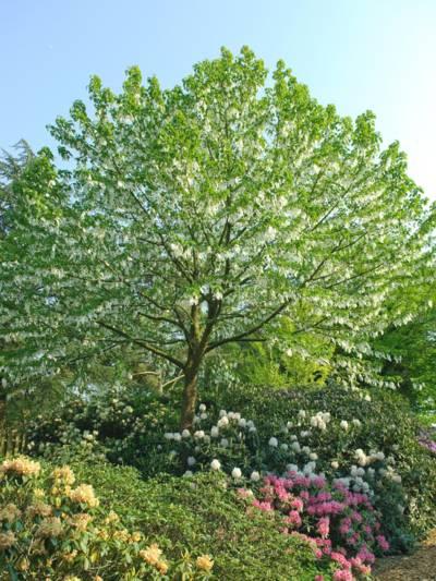 Grünbelaubter Baum
