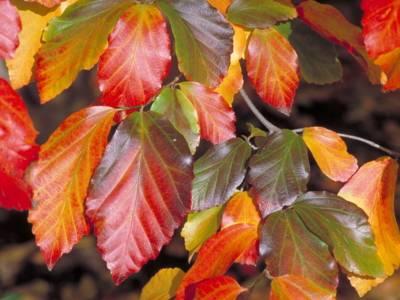 Blätter in rot, gelb und grün Tönen