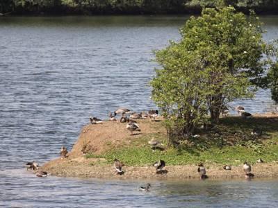 Vögel an einer Landzunge im Koldinger See