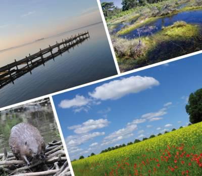 Aus vier Bildern - drei Landschaftsbilder, ein Tierbild - bestehende Collage