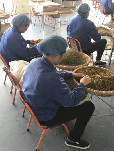 Frauen verarbeiten getrocknete Pflanzenbestandteile.