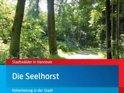 Waldweg im Seelhorster Wald