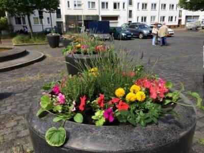 Frisch bepflanzte Blumenkübel auf dem Rübezahlplatz