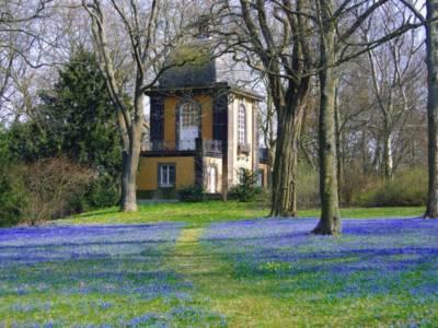 Foto von der Scillablüte auf dem Lindener Berg mit dem Küchengartenpavillon