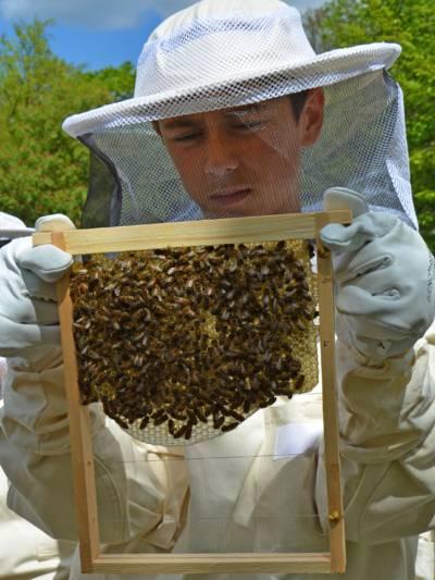 Ein Schüler mit Imker-Schutzkleidung prüft das Bienenvolk und die Waben in einem Holzrahmen