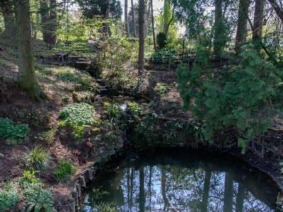 An einem von Bäumen beschatteten Hang fließt ein kleiner Bach in einen kleinen Teich.