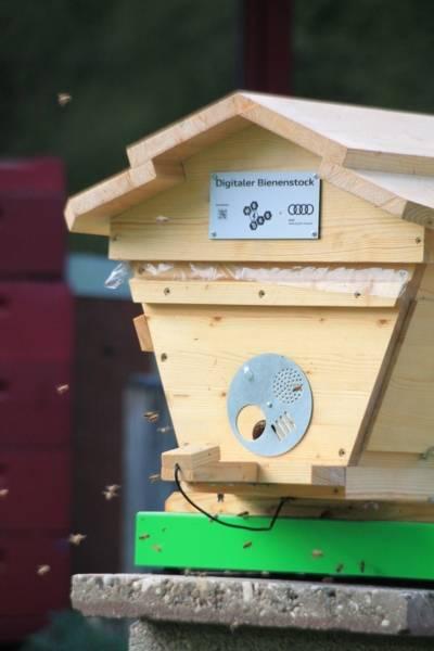 Ein Bienenstock, vor dem Messinstrumente angebracht sind.