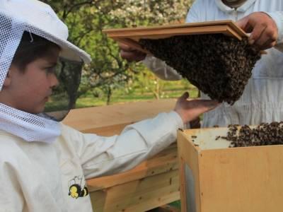 Kind mit Imkerhelm, das ein Bienenvolk berührt.