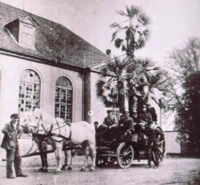 Palmenwagen