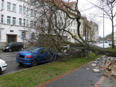 Ein durch den starken Winddruck umgestürzter Baum ist in der Schulenburger Landstraße auf die Oberleitung gefallen und hat eine Begrenzungsmauer sowie einen PKW beschädigt.