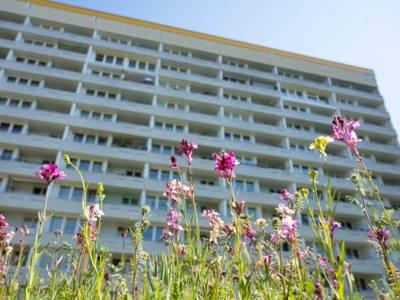 Blumen vor einem Wohngebäude.