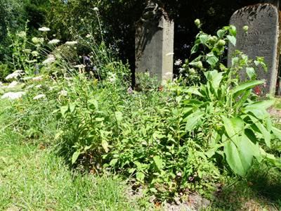 Ein Grab auf dem Heilpflanzen wachsen.