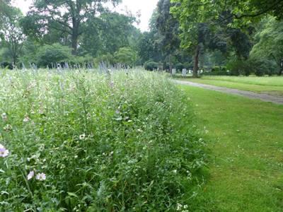 Wildblumenwiese an einem Weg.