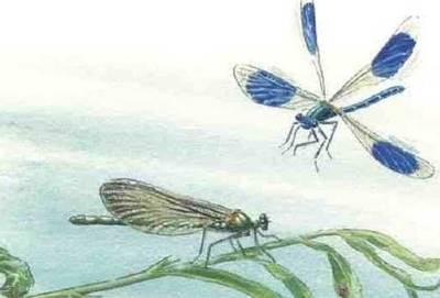 Gezeichnete Libellen auf der Titelseite der Broschüre Wandern am Wasser