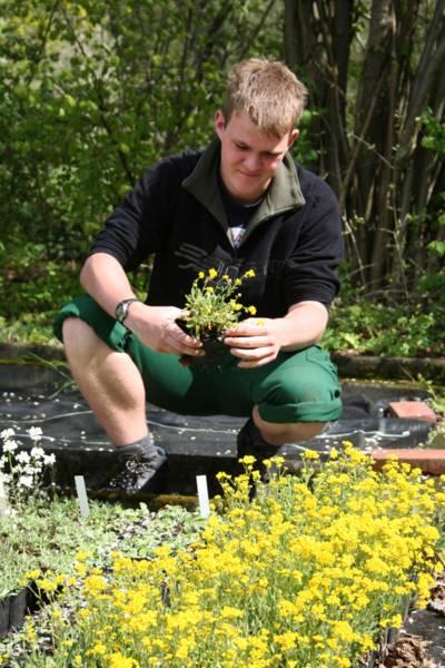 Junger Mann beim Einpflanzen einer blühenden Staude