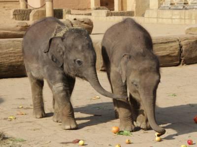 Zwei kleine Elefanten.