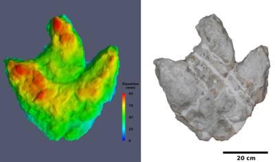 Computergrafik und Gipsmodell eines Dinosaurierfußes.