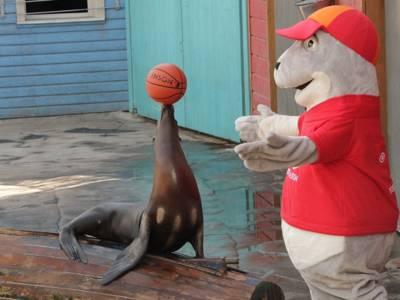 Ein Seelöwe spielt mit einem Basketball, daneben ein Robben-Maskottchen.