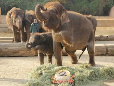 Elefantenmutter mit ihrer Tochter vor einer Torte.