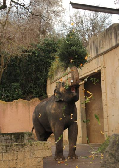 Elefanten im Gemüseregen.