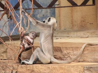 Kleiner Affe und großer Affe.