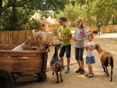 Kinder auf einer Streichelwiese.