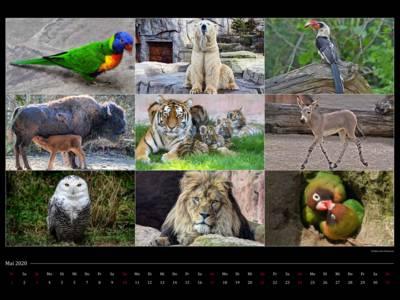 Kalenderblatt mit Tierfotos