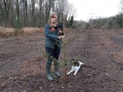 Frau auf gerodetem Waldstück