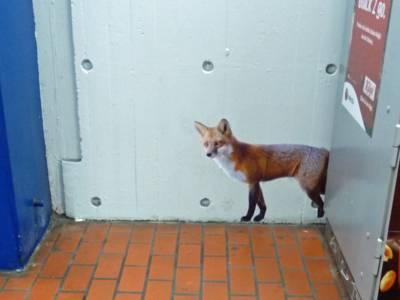 Fuchsplakat neben Automaten