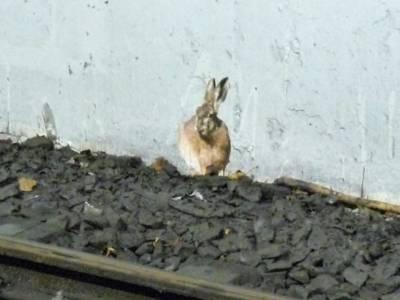 Bild eines Hasen