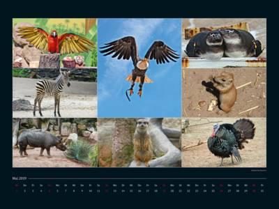 Ein Kalenderblatt zeigt viele Tiere im Zoo.