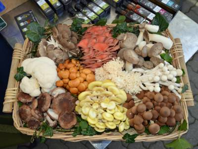 Korb mit diversen Pilzsorten