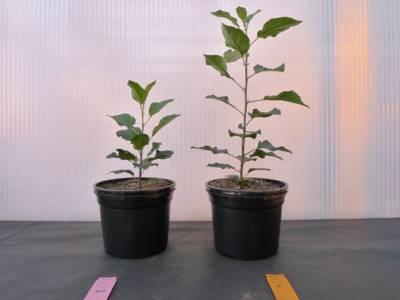 Zwei unterschiedliche große Topfpflanzen