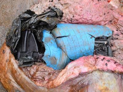 Plastikteile in Pottwalmagen
