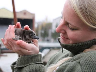 Frau hält kleines Pinguinküken in der Hand