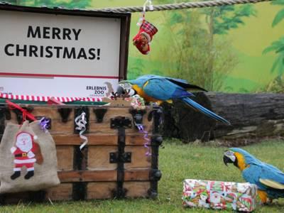 Zwei Papageien an einer Kiste mit Geschenken