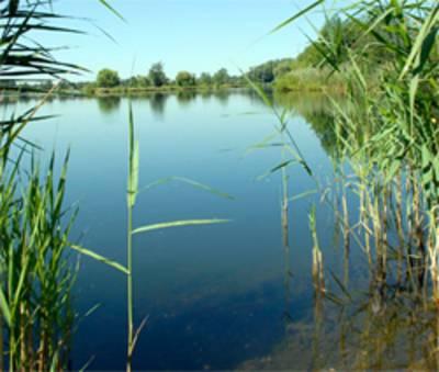 Ein See. Im Vordergrund links eine einzelne Schilfpflanze, am rechten und linken Rand,  mehrere Schilfpflanzen. Das Seewasser leuchtet in unterschiedlichen Blautönen, in der Uferzone kann man den Grund erkennen, im Hintergrud Bäume
