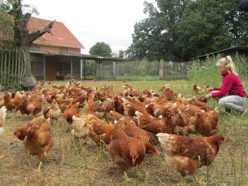 Ein junges Mädchen inmitten von Hühnern.